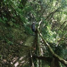 Percorso nel verde per scendere al fiume Lamone Valbura, (foto: Anna Luciani)