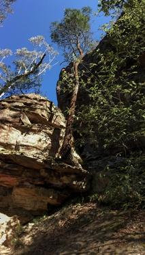 l'albero nella roccia (foto: Anna Luciani)