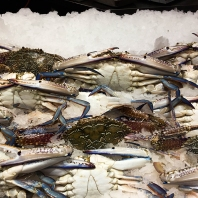 Sydney Fish Market (foto Anna Luciani)