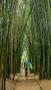 Il sentiero dei Bamboo e Laura. Crystal Castle. (foto: Anna Luciani)