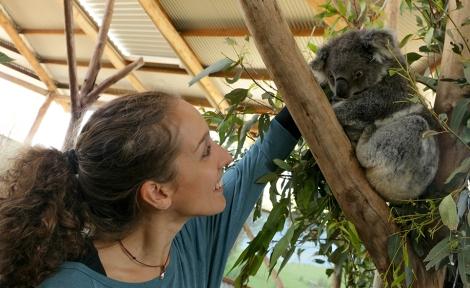 new-castle_koala-canguri-9-copia