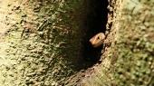 animali della foresta (foto: Simone Chiesa)