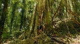Simone. Dorrigo Park. Foresta pluviale subtropicale (foto: Anna Luciani)
