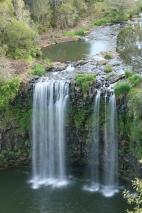 Dangar Falls. Dorrigo Park (foto: Anna Luciani)