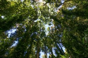 Dorrigo Park. Foresta pluviale subtropicale (foto: Anna Luciani)