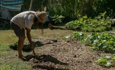 Chief al lavoro nell'orto (foto: Anna Luciani)