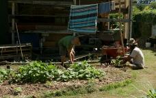 Chief e Ben al lavoro nell'orto (foto: Anna Luciani)