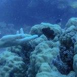 pesci pagliaccio nero (foto: Anna Luciani)