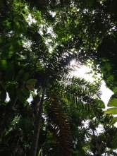 Black Palm (foto: Anna Luciani)