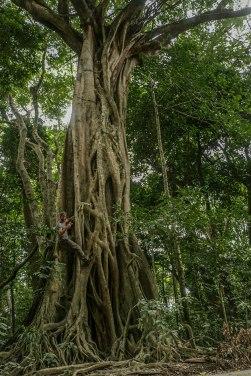 alberi nella Daintree Forest (foto: Anna Luciani)