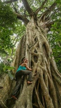 alberi nella Daintree Forest (foto: Simone Chiesa)
