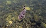 nel Cooper Creek (foto: Anna Luciani)