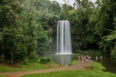 Millaa Millaa Falls (foto: Anna Luciani)