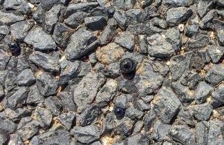 bolle di asfalto che si scioglie al sole (foto: Anna Luciani)