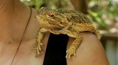 The Bearded Dragon (foto: Simone Chiesa)