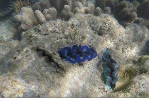 la barriera corallina a border island (foto: Anna Luciani)
