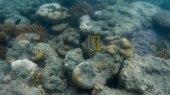 la barriera corallina di Hook Island (foto: Anna Luciani)
