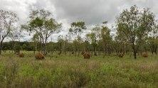 metropoli di termiti (foto: Anna Luciani)