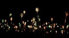 Field of light, installazione di Bruce Munro. Lampade alimentate ad energia solare che cambiano colore illuminando la notte (foto: Anna Luciani)