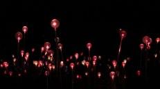 field-of-light-15