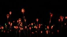 field-of-light-16