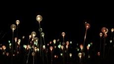 field-of-light-17