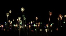 field-of-light-18