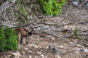 kangaroo-island-78