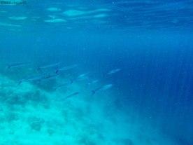 come in un acquario (foto: Anna Luciani)