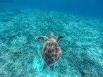 tartaruga a Gili Meno (foto: Anna Luciani)