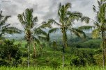 Bali_RISAIE-105