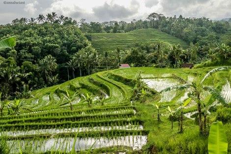 Bali_RISAIE-112_