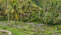 Tegalalang Rice Terrace (foto: Anna Luciani)