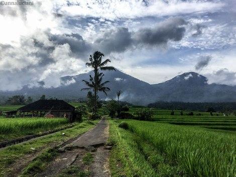 Bali_RISAIE-69