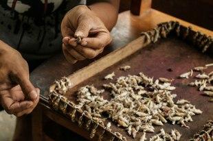 bachi di farfalle (foto: Anna Luciani)