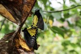 Bali Butterfly Park (foto: Anna Luciani)