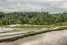 Jatiluwih Rice Terrace (foto: Anna Luciani)