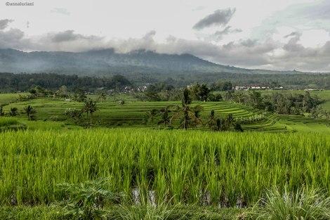 Bali_RISAIE-97