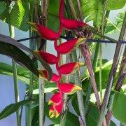 fiori al sole (foto: Anna Luciani)
