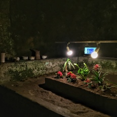 Napoli sotterranea. Alcuni anni fa è stato bandito un concorso per valorizzare ed utilizzare gli ambienti sotterranei. Il progetto vincitore prevedeva la coltivazione di alcune piante. Il progetto non è mai stato realizzato interamente, ma alcune piantagioni sono state coltivate: basilico, ad esempio, e altre piante che sopravvivono grazie all'umidità e all'utilizzo di lampade a led ad energia solare, ricreando così l'alternanza del giorno e della notte. (foto: Anna Luciani)