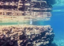 nonostante siano uno dei miei peggiori incubi, riconosco una bellezza unica nelle meduse (foto: Anna Luciani)