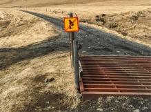 se l'hanno messo un motivo ci sarà! sotto al ponte dalle grate di ferro passa il fiume del canyon Fjaðrárgljúfur (foto: Anna Luciani)