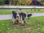 Strani animali al Parco lungo il Rio Bernesga (foto: Anna Luciani)