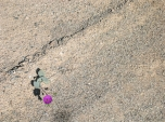 """Le """"rose"""" di Atacama (foto: Anna Luciani)"""