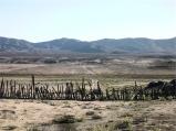 Deserto di Atacama (foto: Anna Luciani)