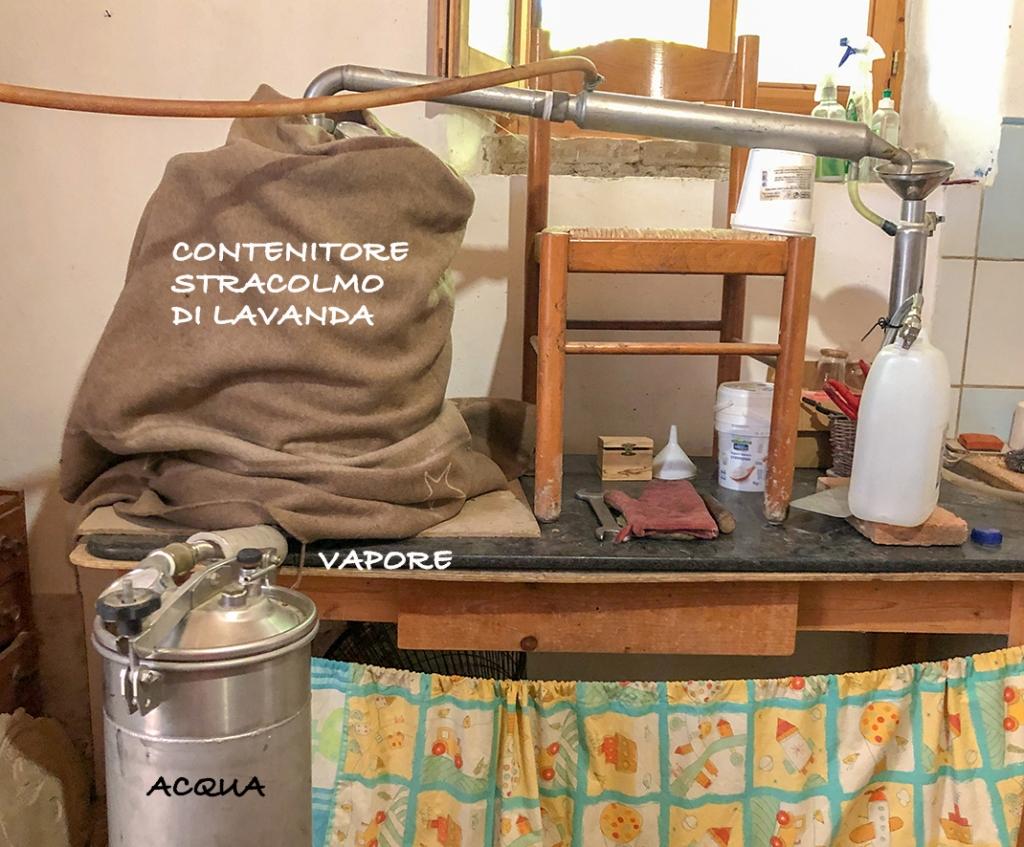 campi di lavanda in italia